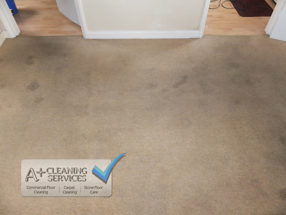 Carpet Cleaner Cirencester - Tenancy (After) by A+ Cleaning Services